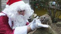 santa-feeding-meerkat.jpeg