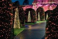 christmas_at_kew_littlebird.jpg