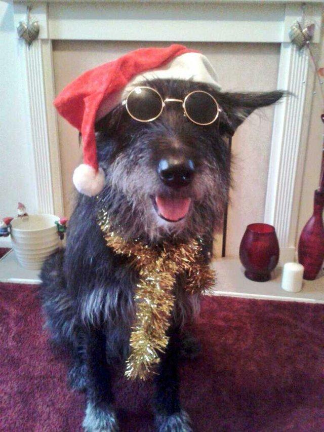 Bobbie, seen on Top Dog Model