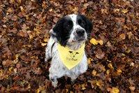 thumbnail_Stanley Dogs Trust.jpg