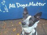 All dogs matter 2.jpg