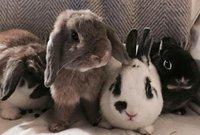 Bunny gang.jpg