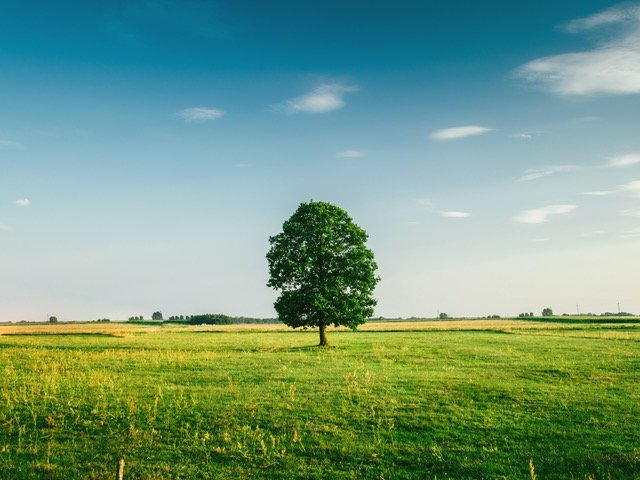 tree-field-horizon-countryside-81413 (1).jpeg
