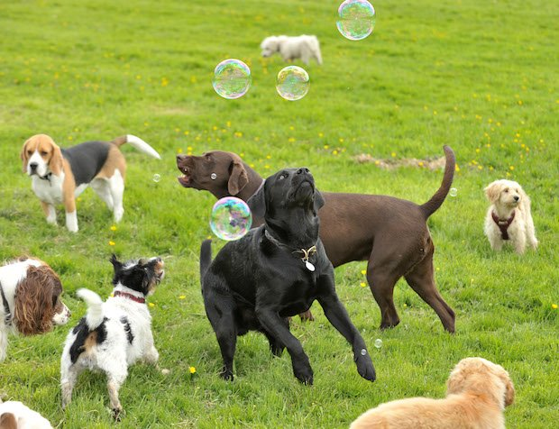 Bruce's Doggy Day Care - Bubbles1 copy 2.jpg