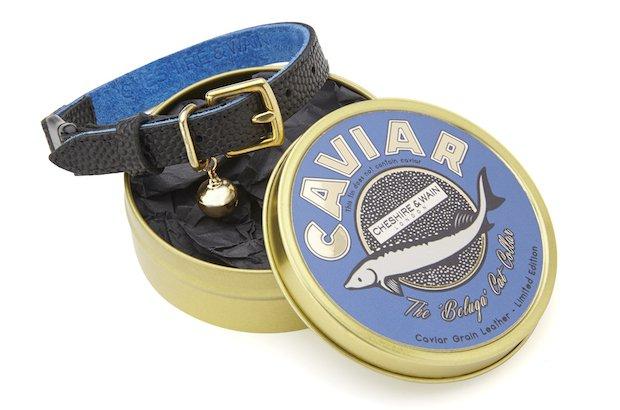 Cheshire and Wain Caviar Collar copy.jpg