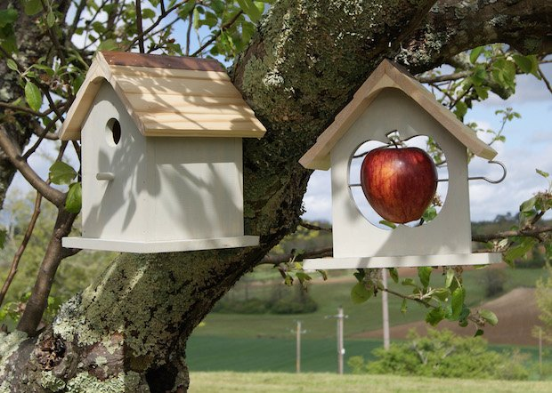 1. Nesting Box & Apple Feeder copy.jpg