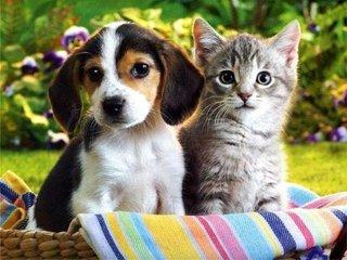 Pets pyjamas.jpg