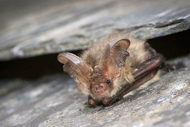 RHS Garden Wisley Events May Bat Walk cr Tom Marshall.jpg