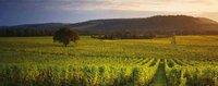 denbies wine estate copy.jpg