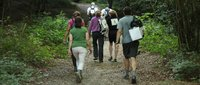 Walking-Main-image.jpg