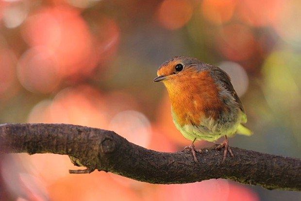 robin-bird-on-branch-in-the-garden.jpg